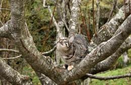 Gemma sull'albero